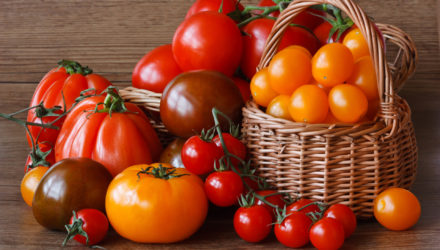 Лучшие сорта томатов для Московского региона